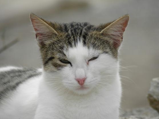 cat-812744_960_720